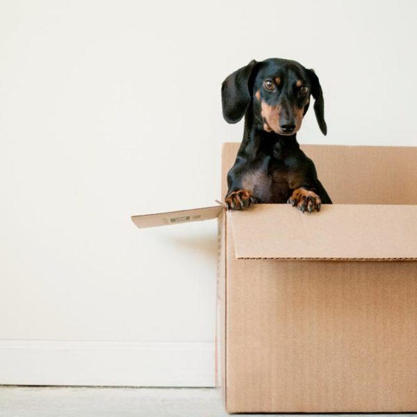 Que faire pour faciliter votre déménagement?