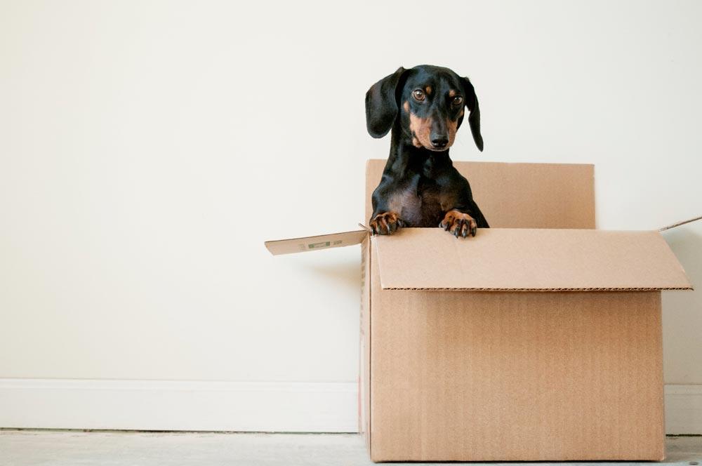 astuces faciliter déménagement