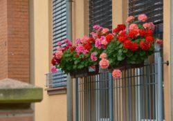 Pourquoi de nombreux particuliers privilégient la jardinerie en ligne ?